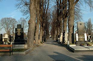 Blumen augustyn friedhof kr nze friedhof jedlesee for Gartengestaltung 1210 wien