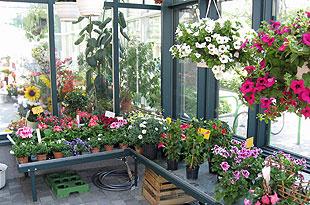 Blumen augustyn liesneckgasse 12 1210 wien kr nze for Gartengestaltung 1210 wien